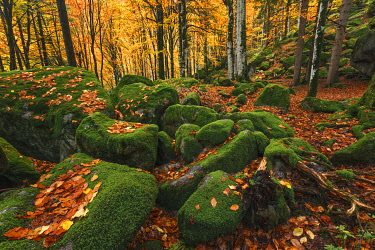 CLKAG121059 Bagni di Masino forest in Autumn time, Val Masino, Sondrio province, Valtellina, Lombardy, Italy, Europe