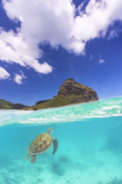 CLKCC119726 a turtle swims around Le Morne in colorful sea, Black River, Mauritius, Africa