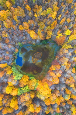 CLKCC121572 aerial view of the forest and lake with autumn colors, tuscan-emilian apennine national park, municpality of Ventasso, Reggio Emilia province, Emilia-Romagna district, Italy, Europe