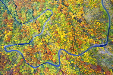 CLKCC121575 aerial view of the forest and road with autumn colors, tuscan-emilian apennine national park, municpality of Pontremoli, Massa-Carrara province, Tuscany district, Italy, Europe