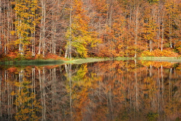 CLKCC121580 the forest with its autumn colors reflected in the Pranda Lake, tuscan-emilian apennine national park, municpality of Ventasso, Reggio Emilia province, Emilia-Romagna district, Italy, Europe