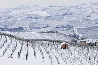 CLKDB120080 Langhe, Cuneo district, Piedmont, Italy. Langhe wine region winter snow