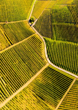 CLKFB122046 Aerial view of vineyard textures in autumn. Barolo wine region, Langhe, Piedmont, Italy, Europe.