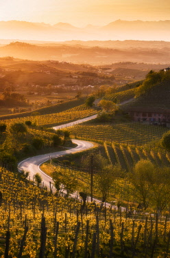 CLKGF114522 Sunset in Langa with road through the vineyards of Castiglione Tinella, Piedmont, Italy, Europe