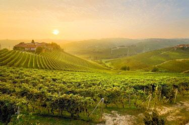 CLKGF114793 Sunrise on the vineyards of Barbaresco,Piedmont, Italy