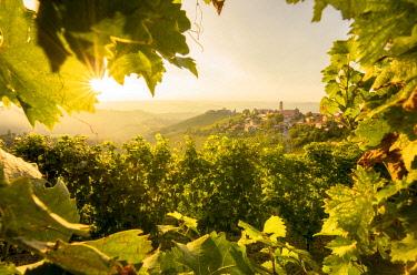 CLKGF118046 Sunset hidden on the vineyards, Treiso, Piedmont, Italy