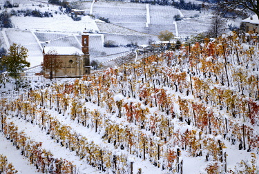 CLKGF120567 First snow on the orange vineyards in Langhe, Montelupo Albese, Piedmont, Italy