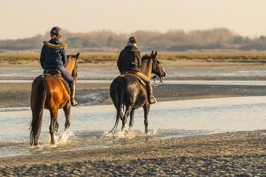 HMS3481157 France, Somme, Baie de Somme, Natural Reserve of the Baie de Somme, Le Crotoy, horseback riders walk in the bay at low tide (Baie de Somme)