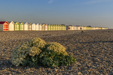 HMS3569811 France, Somme, Cayeux sur Mer, The path boards in Cayeux sur Mer is the longest in Europe, it sports its colorful beach cabins with evocative names on nearly 2 km long on the pebble cord