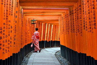 CLKMG118666 Fushimi Inari shrine, Torii gates,Kyoto,Japan,Asia