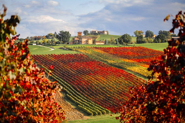 CLKST119398 Castelvetro vineyards, Modena province, Emilia Romagna., Italy