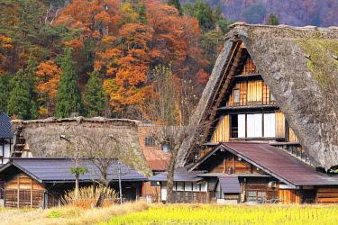 JAP2140AWRF Traditional houses of Ogimachi (UNESCO World Heritage Site), Shirakawa-go, Toyama Prefecture, Japan