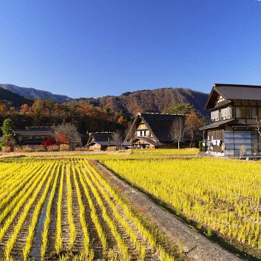 JAP2285AW Traditional houses of Ogimachi (UNESCO World Heritage Site), Shirakawa-go, Toyama Prefecture, Japan