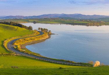IRL1070AW Ireland, Co.Donegal, Fanad, Mulroy bay, sheep in farmland