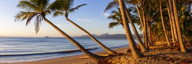AUS3812AW Palm tree overhanging Newell Beach .Mossman, Far North Queensland, Queensland, Australia