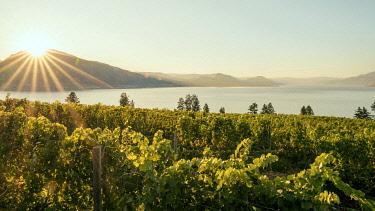 CAN3584AW Okanagan Valley, vineyards near Penticton, British Columbia, Canada