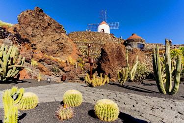 SPA9678AW Spain, Canary Islands, Lanzarote Island, Guatiza, the Cactus garden draw by Cesar Manrique