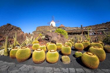 SPA9679AW Jardin de Cactus, garden by Cesar Manrique. Lanzarote, Canary Islands, Spain