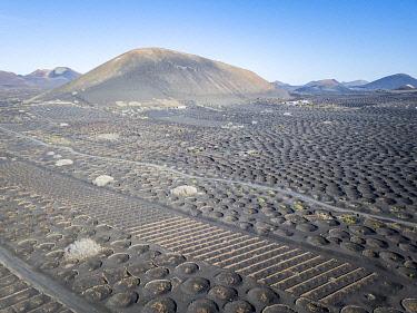 SPA9715AW La Geria volcanic landscape with vineyards, Lanzarote, Canary Islands, Spain