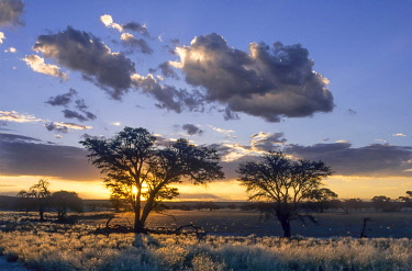 IBLDRN03755608 Sunset over the Nossob Valley, Kgalagadi Transfrontier Park, South Africa, Africa