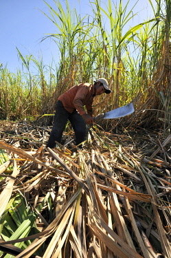 IBLFLK00882574 Underage migrant worker harvesting sugar cane for the production of ethanol and biodiesel, Montero, Santa Cruz, Bolivia, South America