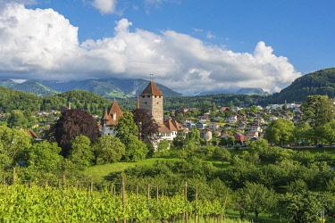 IBXJKI05090501 Vineyards with Castle Spiez, Spiez, Bernese Oberland, Switzerland, Europe