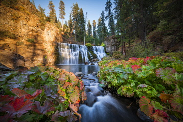 IBXMMW04852498 Middle Falls, Fall Waterfall, McCloud River, Siskiyou County, California, USA, North America
