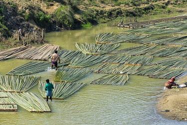 AS03KSU0278 Transporting bamboo timber on the river, Chittagong, Bangladesh.