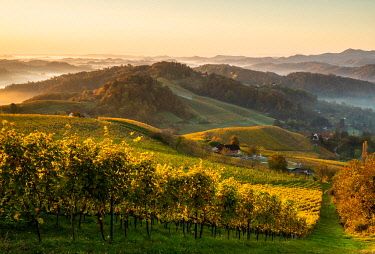 IBLMVR05118072 Vineyard in autumn at sunrise with fog, Südsteirische Weinstrasse, Styria, Austria, Europe