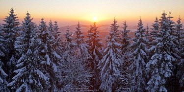 IBLSZI04511583 Snow covered spruce trees at sunset in winter, backlit, near Hilchenbach, Rothaargebirge, Siegerland, North Rhine-Westphalia, Germany, Europe