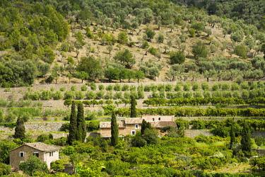 IBXDJS04521656 Mountain village with citrus plantations, Fornalutx, Serra de Tramuntana, Majorca, Balearics, Spain, Europe