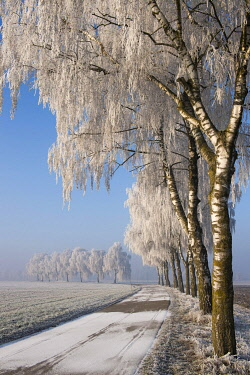 IBXJOG04469318 Winter landscape, road with birch trees (Betula), hoarfrost, Erdinger Moos, Bavaria, Germany, Europe