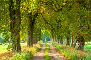 IBXKCV04883703 Field path through avenue with Horse chestnuts (Aesculus), Mecklenburg-Western Pomerania, Germany, Europe