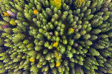IBXMAN05106008 Autumn mixed forest from above, near Krun, drone shot, Upper Bavaria, Bavaria, Germany, Europe