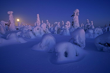 IBXMKH05110765 Snowy landscape with full moon, Kuntivaara, Finland, Europe