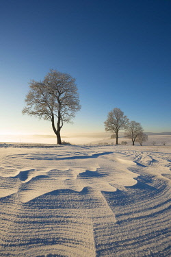 IBXMKL04473402 Trees in winter landscape with snow drifts, Konstanz district, Baden-Wurttemberg, Germany, Europe