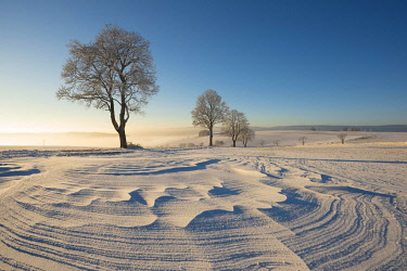 IBXMKL04473403 Trees in winter landscape with snow drifts, Konstanz district, Baden-Wurttemberg, Germany, Europe