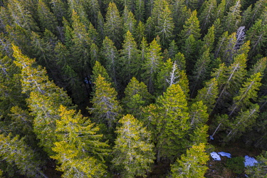 IBXMMW05092811 Coniferous forest, from above, aerial view, near Grainau, Upper Bavaria, Bavaria, Germany, Europe