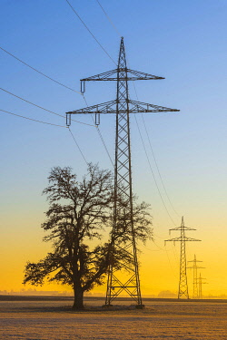 IBXTKE05114887 Overhead lines, high voltage pylons with English oak (Quercus robur) in the morning, Swabian Alb, Baden-Wurttemberg, Germany, Europe