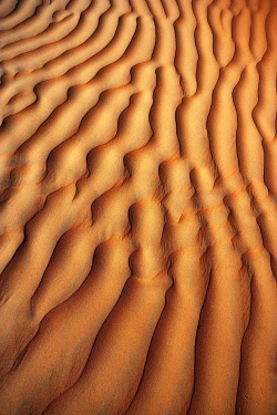 IBXWWE05094944 Wave structure, sand dune, desert Rimal al Wahiba or Wahiba Sands, Sultanate of Oman