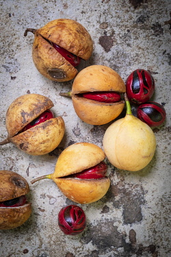 IDA1076AW Asia, Indonesia, Spice Islands, Maluku, Banda, Banda Besar island, a split nutmeg fruit showing the red mace and brown nutmeg