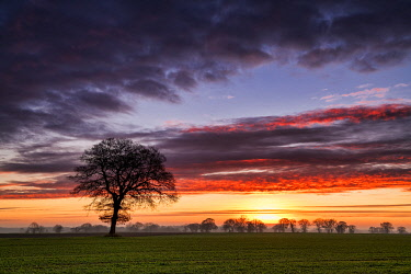 ENG16510AW Lone Tree at Sunrise, Norfolk, England