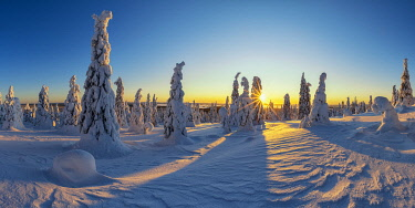 FIN1165AW Sunburst Through Snow-covered Pine Trees, Riisitunturi National Park, Posio, Lapland, Finland