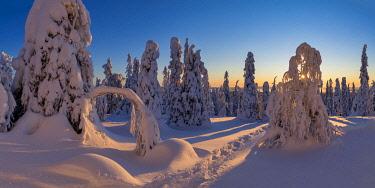 FIN1166AW Sunburst Through Snow-covered Pine Trees, Riisitunturi National Park, Posio, Lapland, Finland