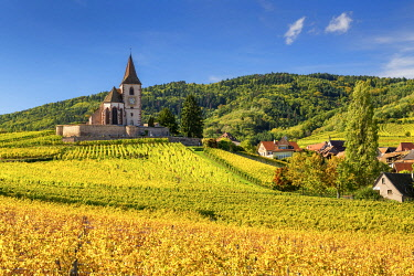 FRA11798AW Church & Vineyards in Autumn, Hunawihr, Alsace, France