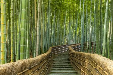 JAP2393AW Steps Through Bamboo Forest, Adashino Nembutsu-ji Temple, Arashiyama, Kyoto, Japan