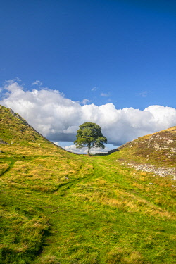 UK08766 UK, England, Northumberland, Hexham, Henshaw, Hadrian's Wall, Sycamore Gap