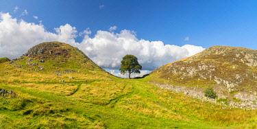 UK08769 UK, England, Northumberland, Hexham, Henshaw, Hadrian's Wall, Sycamore Gap