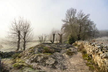 POR10876AW Misty and cold morning with common ashes and oaks at Vale de �guia, in the International Douro Nature Park (Parque Natural do Douro Internacional). Miranda do Douro, Portugal