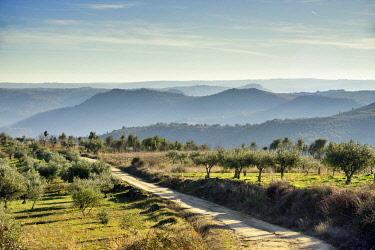 POR10885AW Olive groves, Sendim. International Douro Nature Park (Parque Natural do Douro Internacional). Trás-os-Montes, Portugal